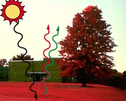 demonstrating-chlorophyll-reflect-near-infrared-waves-IR-image
